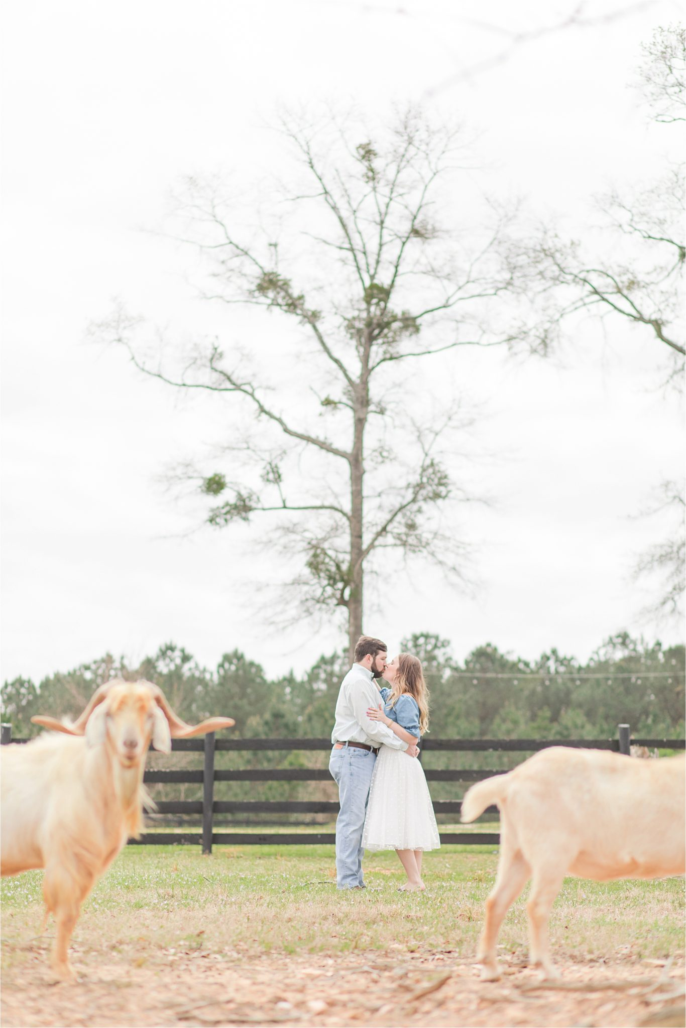 auburn-alabama-wedding-photographer-engagement-sessions-farm-goats-animals