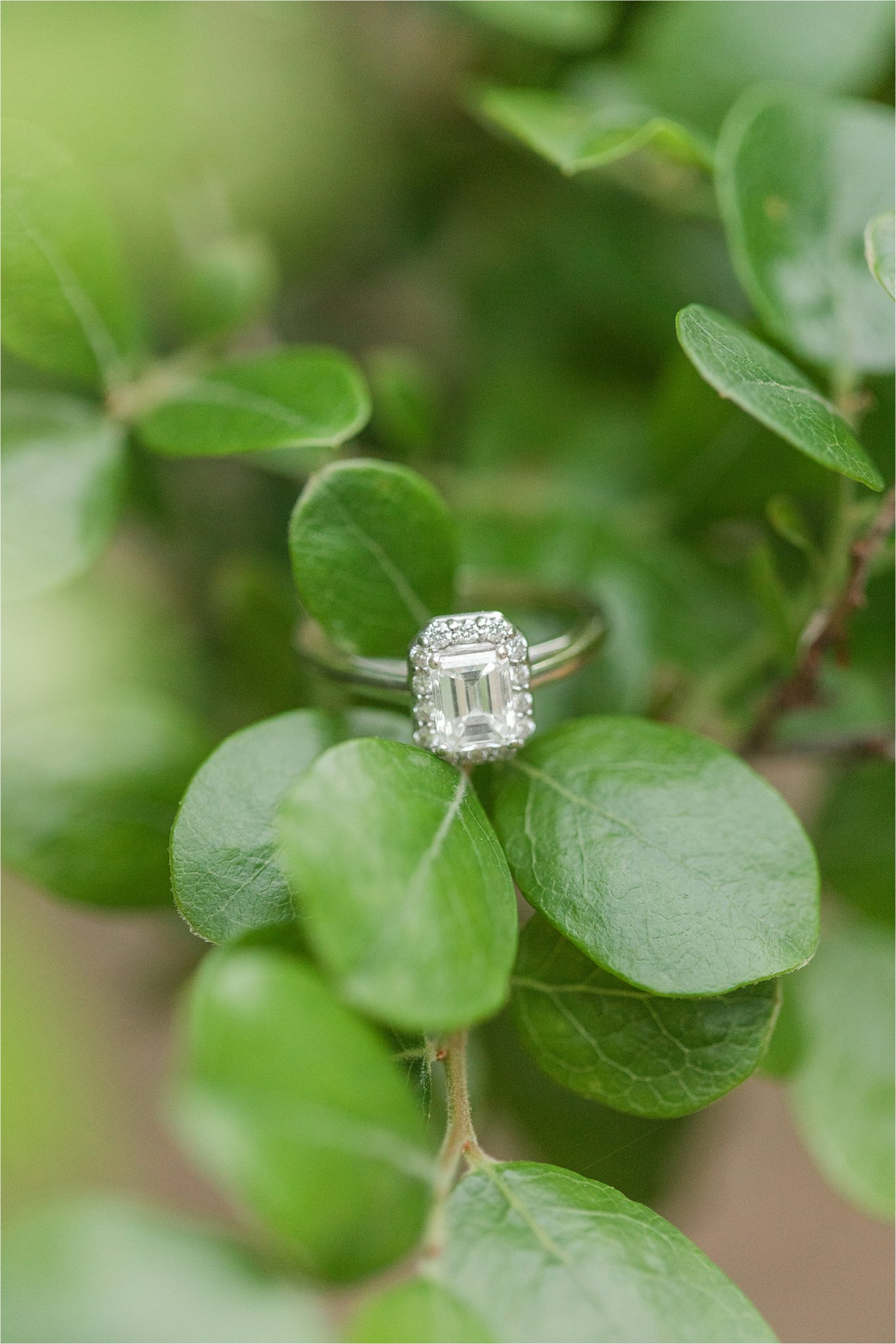 Engagement ring-white gold-emerald cut-diamond halo-Alabama engagement session locations-Baldwin County-Blakeley State Park-Mobile Alabama wedding photographer